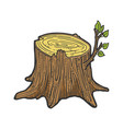 tree stump with sprout sketch vector image vector image