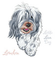dog breed lowchen vector image vector image
