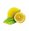 lemon watercolor painting on white background vector image