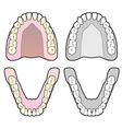 Tooth Chart vector image