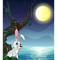 A rabbit and the bright full moon vector image