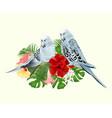 budgerigars home pets blue pets parakeets vector image