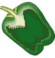 green bell pepper in cross section vector image