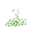 mint leaf background vector image vector image