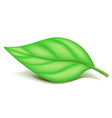 Oblonged green leaf on small stem isolated vector image