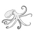 octopus vulgaris wildlife animal vector image vector image