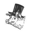 pig animal in cylinder top hat engraving vector image vector image