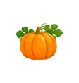 pumpkin isolated icon on white background vector image