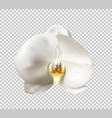 flowers orchid white vector image