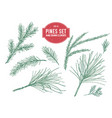 collection of hand drawn pastel pine branch vector image