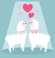 happy valentines day with couple llama in love vector image