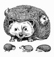 hedgehog set spiny forest animal engraved vector image vector image