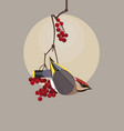 waxwing on a branch of viburnum vector image vector image