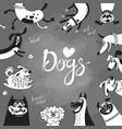card with joyful dogs and happy puppies vector image vector image
