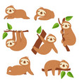 cute sloths cartoon sloth hanging on tree branch vector image vector image