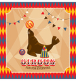 Vintage circus card with eared seal vector image vector image