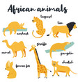 big set of african animals on white background vector image vector image