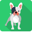 dog French bulldog icon flat design vector image vector image