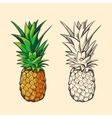 Outline pineapple and color cartoon