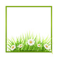 green frame with grass and daisies vector image vector image