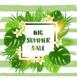 summer tropical background for seasonal sale vector image vector image
