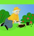 granny in the garden vector image