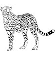 running cheetah hand-drawn with ink vector image