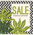 sale tropical summer poster with jungle leaves on vector image vector image