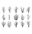 winter dry trees vector image