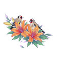 hand drawn goldfinches sitting on orange lily vector image