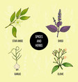 hand drawn set of culinary herbs and spices vector image vector image