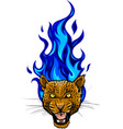 leopard head with fire vector image