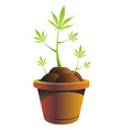cannabis pot vector illustration vector image vector image