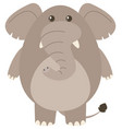 gray elephant on white background vector image vector image