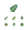 flat icon nature set of acacia leaf timber tree vector image