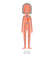 blood system human poster vector image
