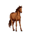 horse of arabian breed sketch with brown mare vector image vector image