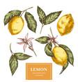 lemons hand drawn colorful vector image vector image