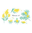 set of beautiful yellow mimosa flowers or vector image vector image