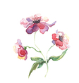 The spring flowers watercolor isolated vector image vector image