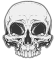 Realistic white and grey human skull tattoo vector image vector image