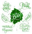 modern set of healthy vegan organic food vector image