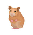 cute hamster small rodent animal vector image vector image