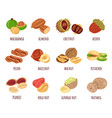 different nut isolated design element isolated set vector image