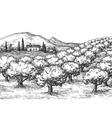 Olive grove landscape vector image vector image