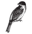 reed bunting vintage vector image vector image