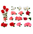 roses graphics vector image vector image