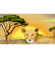 a tiger in nature vector image vector image