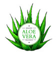 aloe vera with frame hand vector image