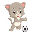 cat playing soccer vector image